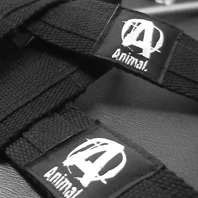Universal Lifting Straps, One Size